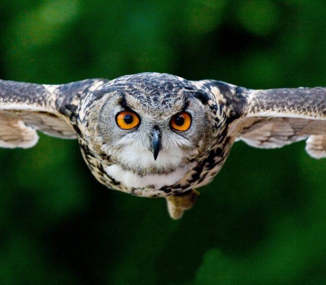 Scan de wilde dieren in je achtertuin