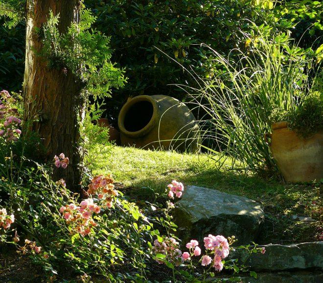 Met deze tuinplanten maak je wat bijzonders van je tuin